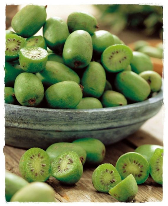 kiwi issai
