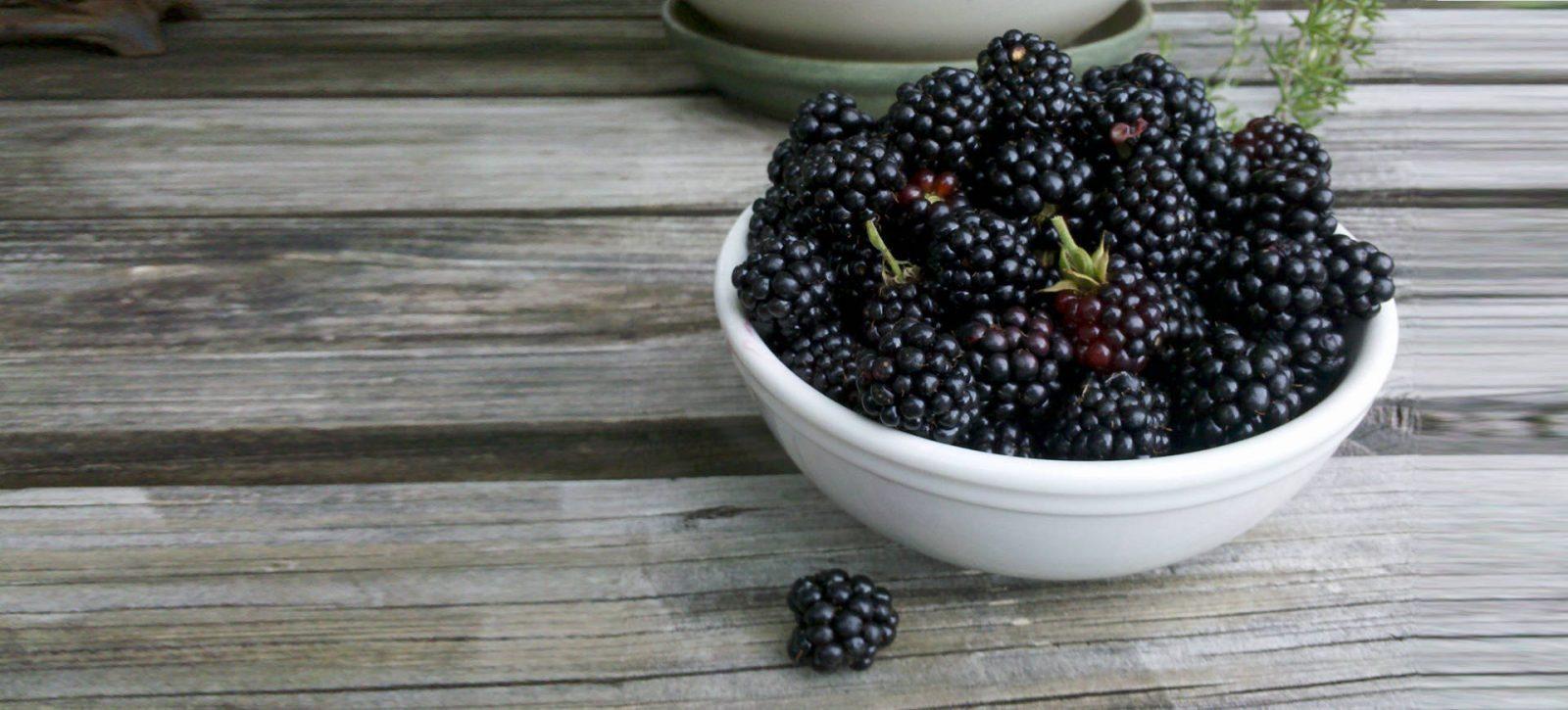 Vendita piante di more rubus fruticosus vendita piante online for Vendita piante di lamponi