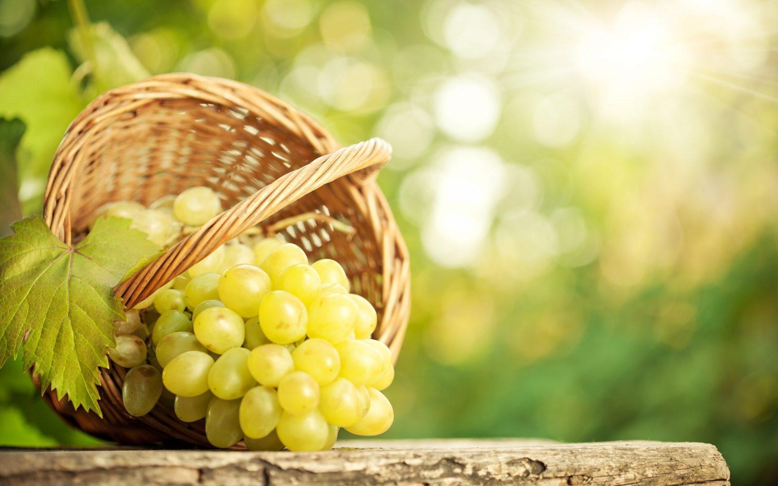 Viti da tavola resistenti vendita piccoli frutti - Coltivare uva da tavola in vaso ...