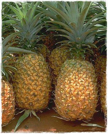 ananas-frutto