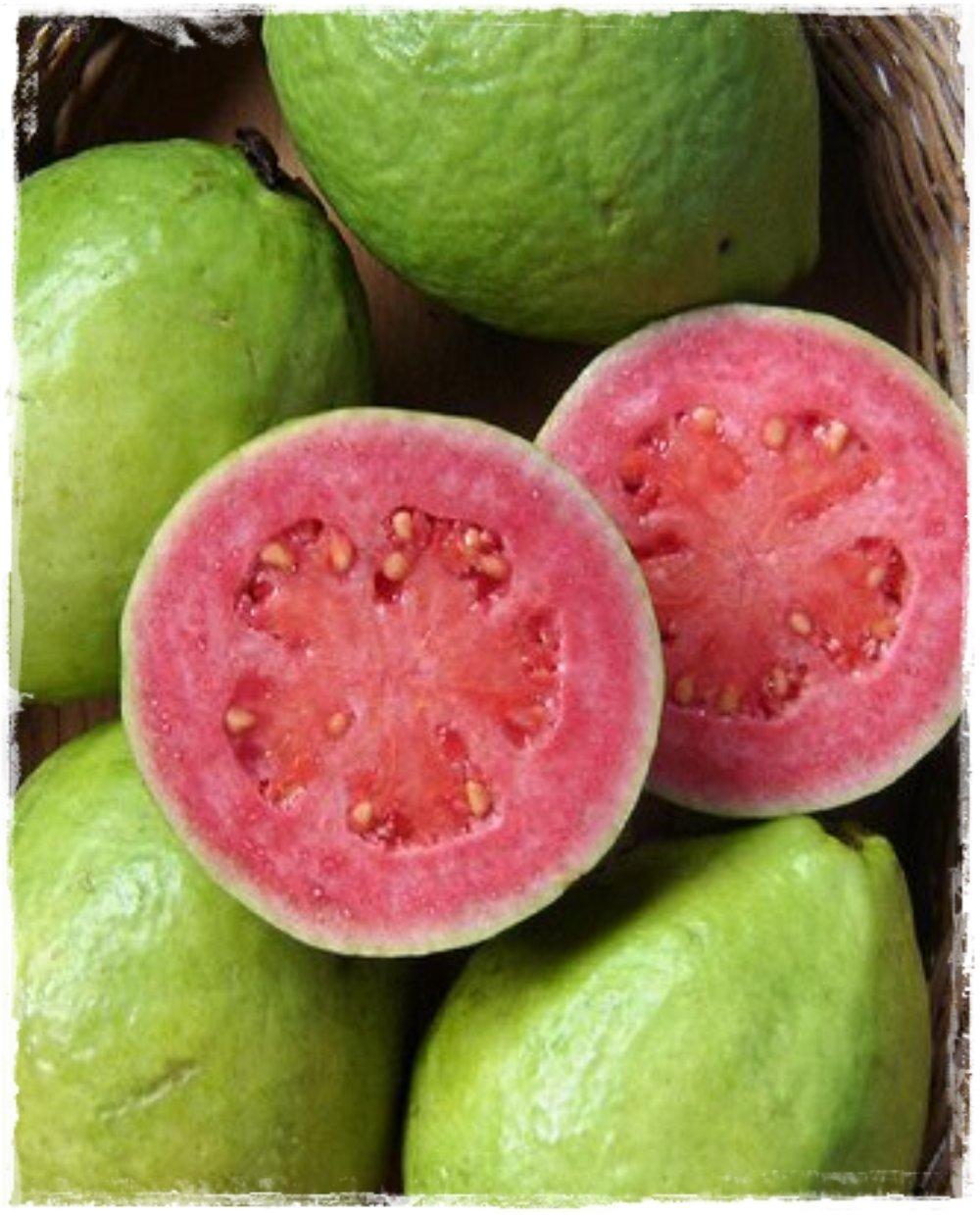 guava rosa frutto grande 39 psidium guajava 39 vendita