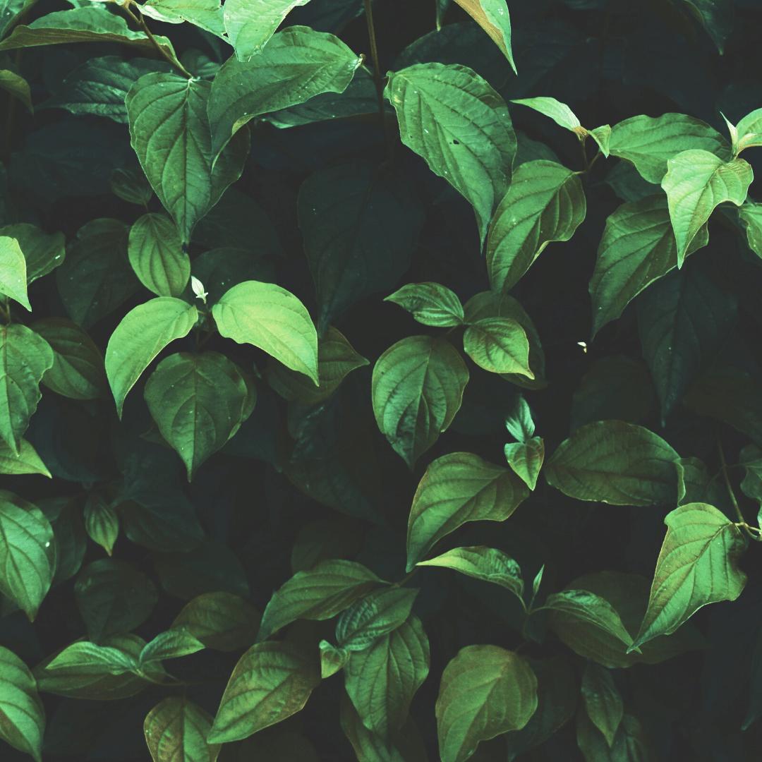 Piante Verdi da Esterno Archivi - Vendita Piccoli Frutti