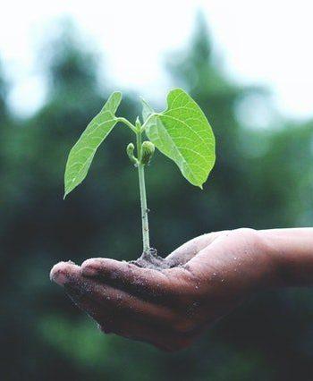 Plants Care - Cura delle Piante